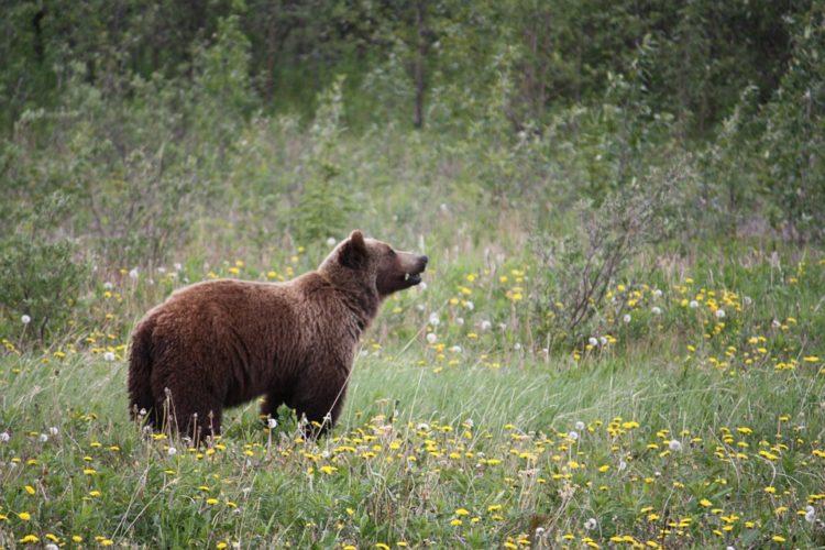 do not feed bears