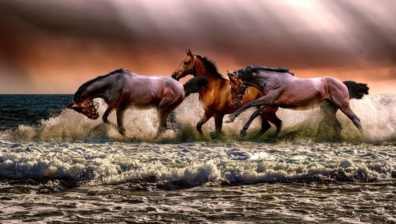 horse artist