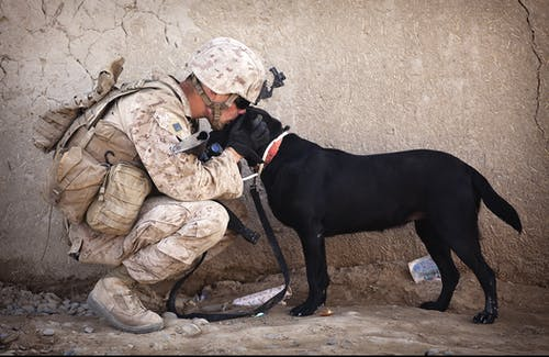 dogs suffer like soldiers