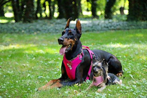 evolutionizing dog training