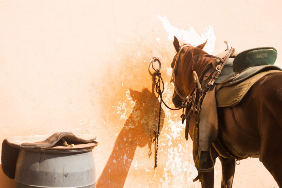 Buying a Saddle