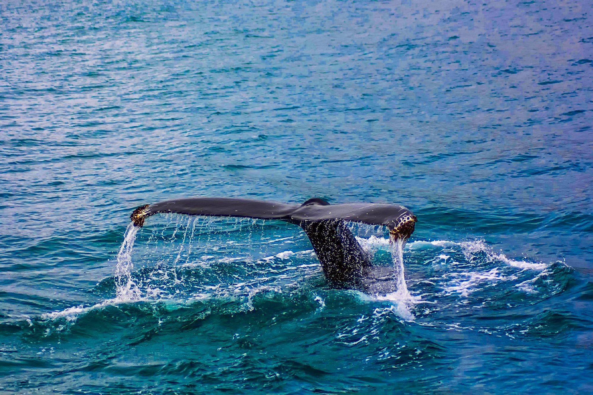 whale whisperer
