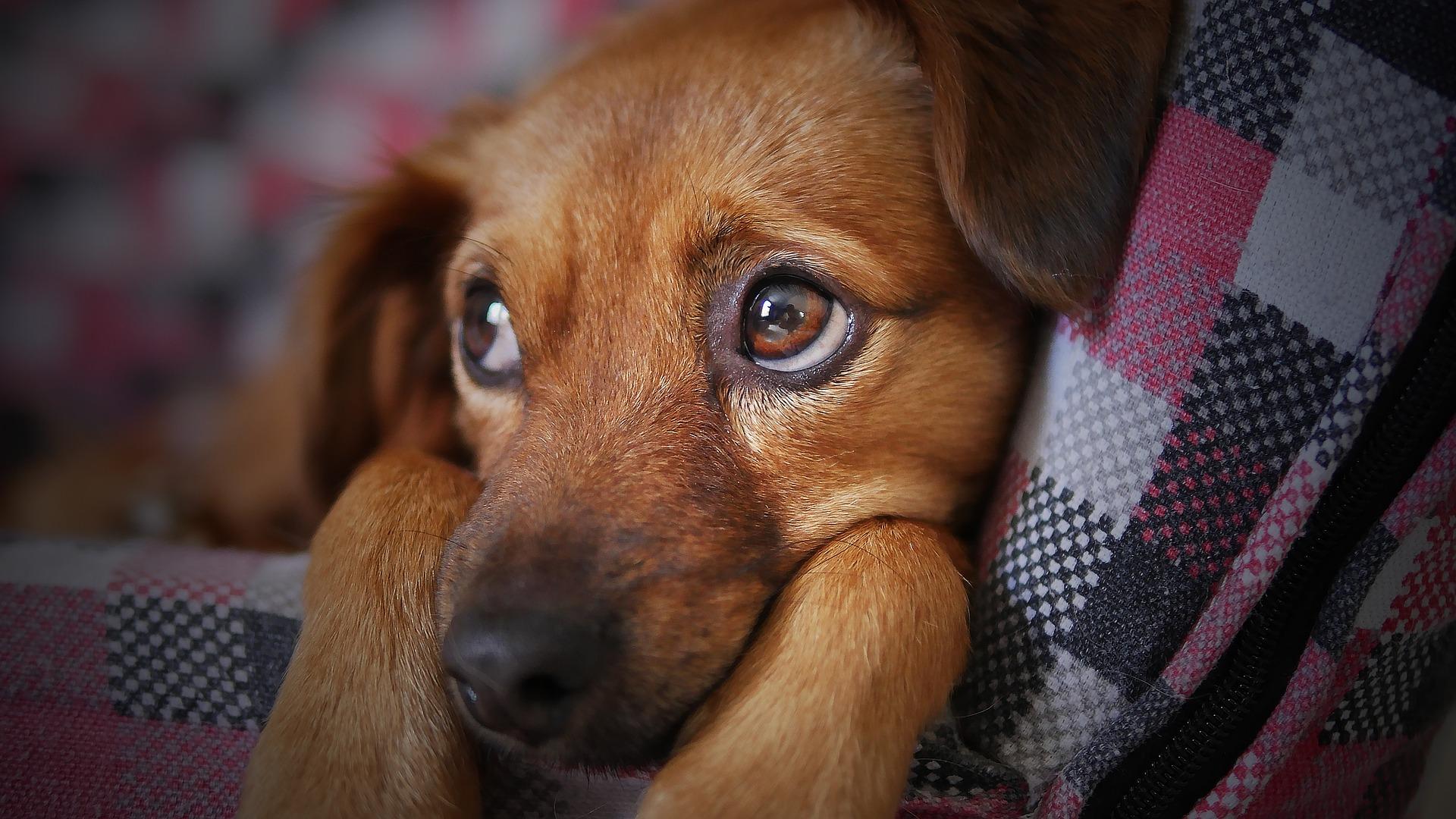 doggie health