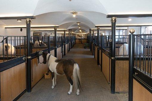 living arrangements horse