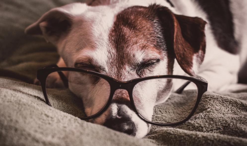 service dog eye exams