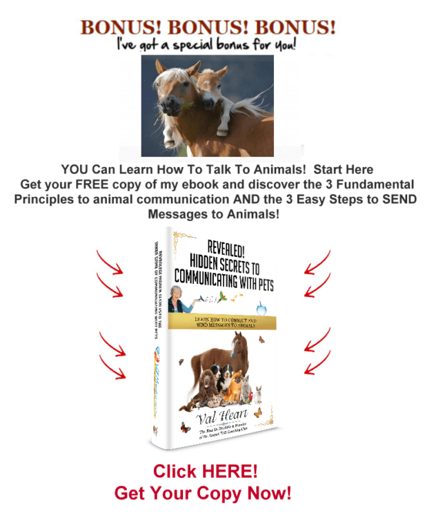 secrets to communicating with horses gift