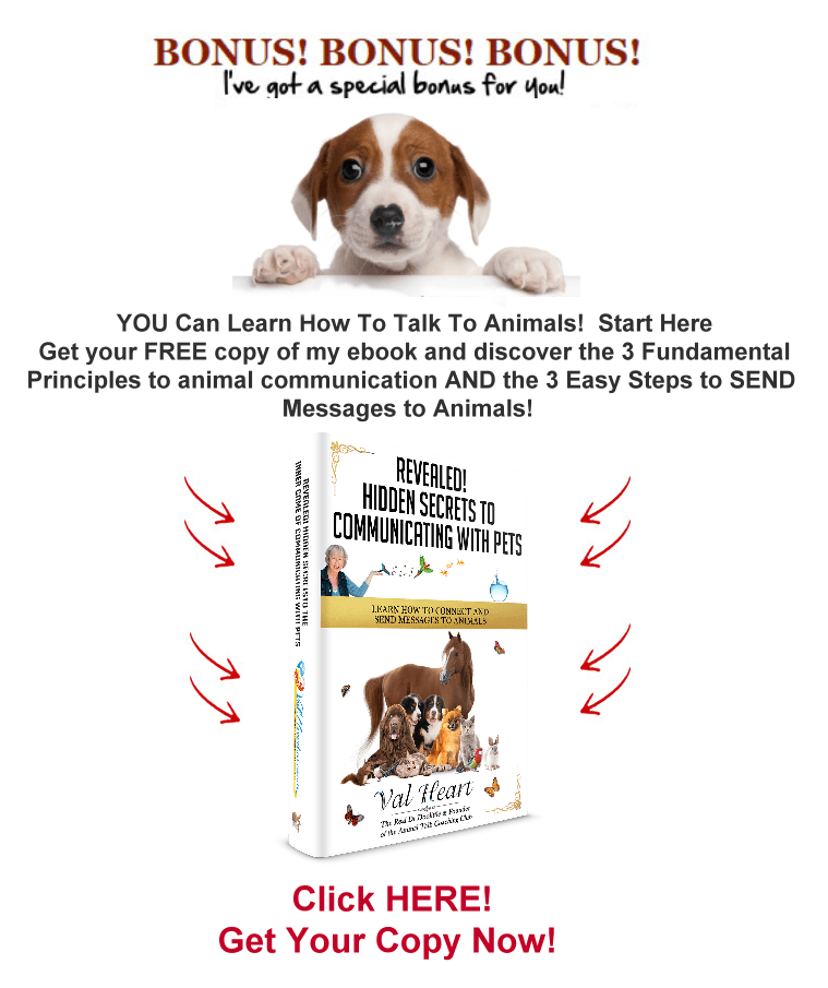 Secrets to Animal Communication with Dogs