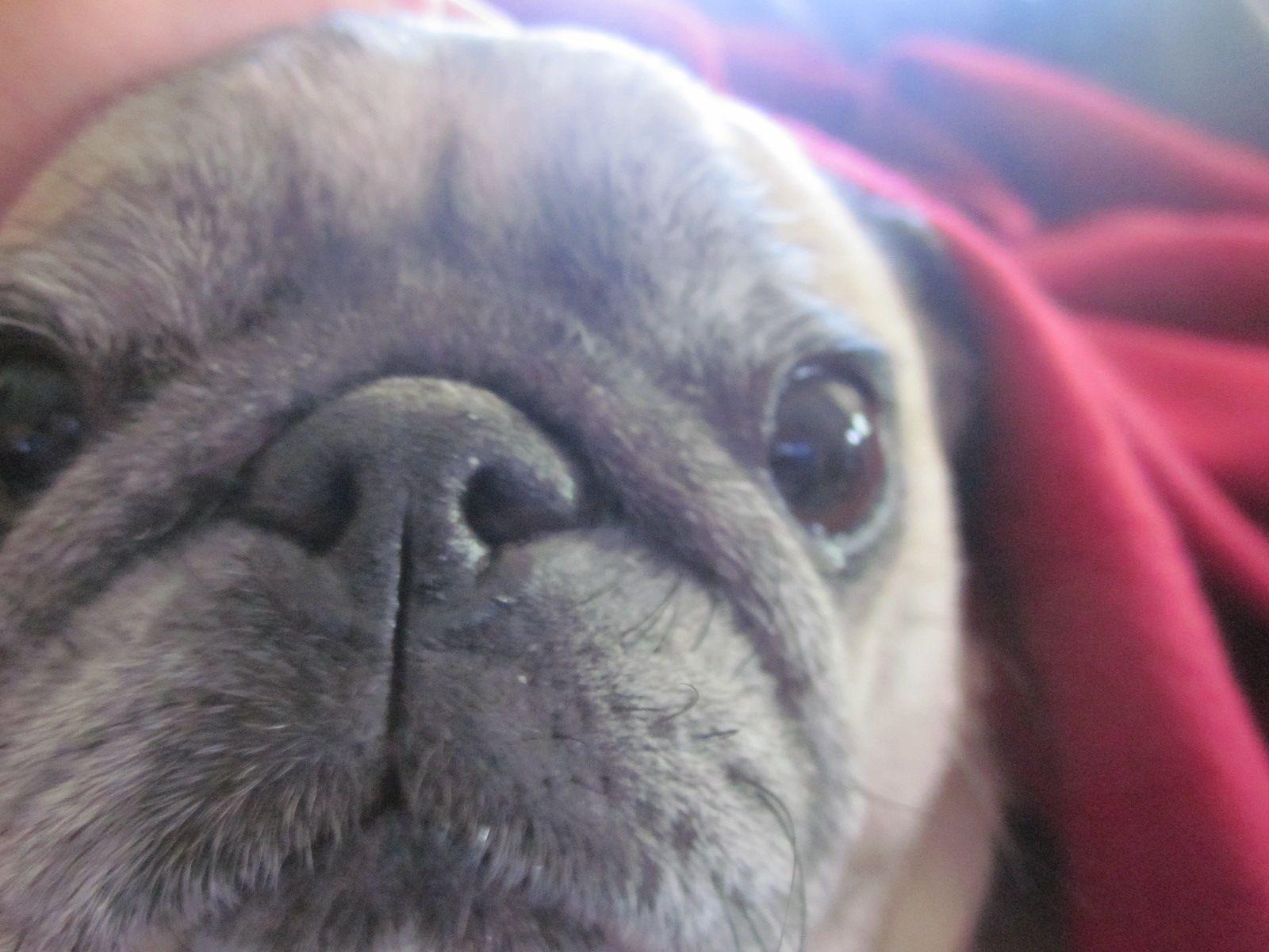 joann finger stella dog closeup