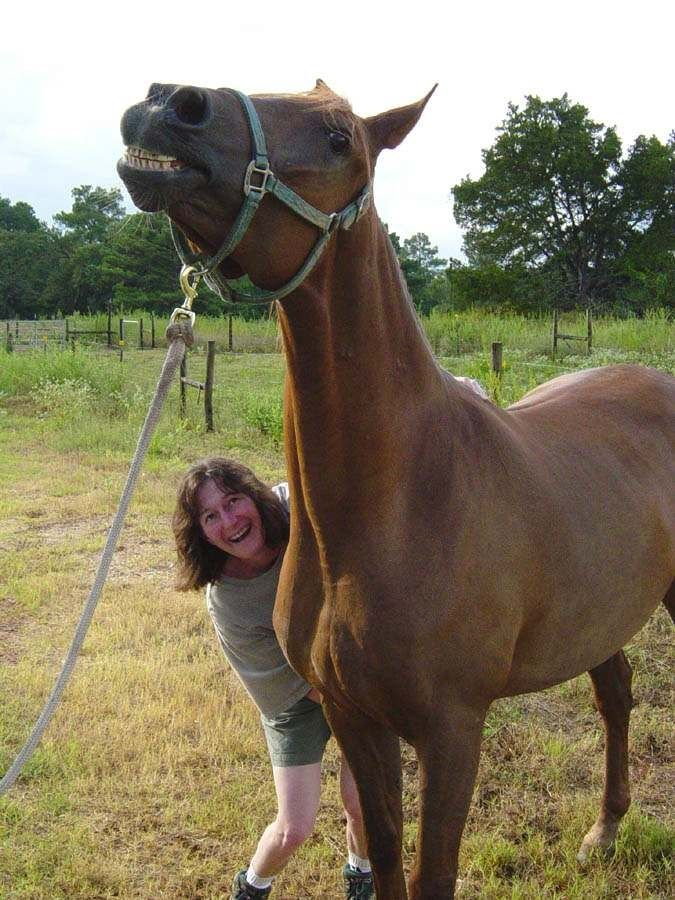 horse whisperer gives voice to horses