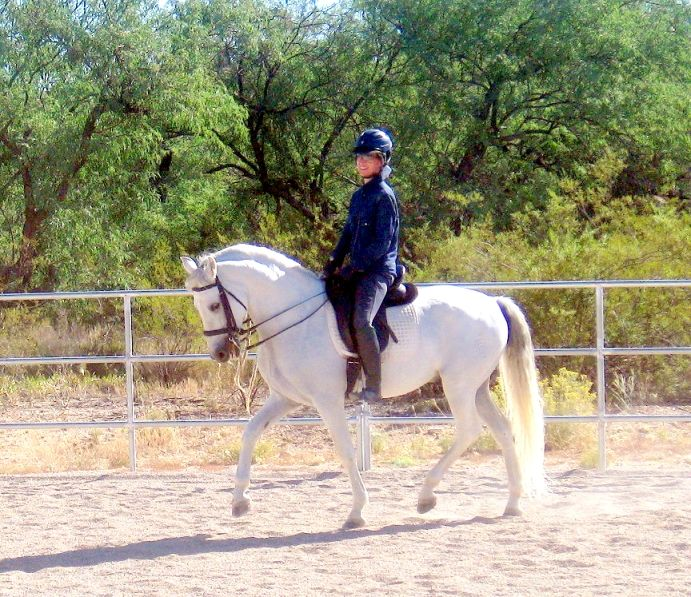 horse whispering with andalusian dressage