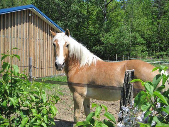 horse whispering turned Gabe around