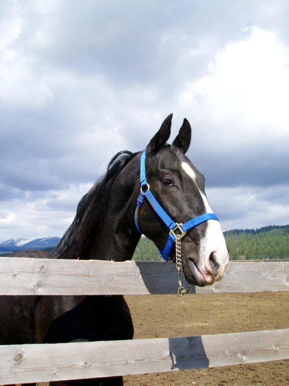 Horse Whispering Saves Image