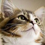 Cat-closeupofcat_000