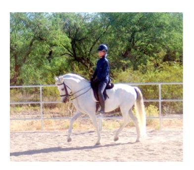 horse whisperer helps dressage horse