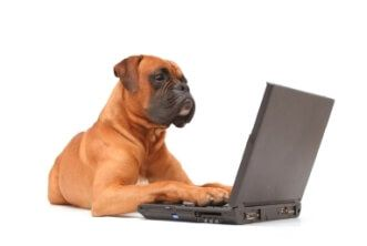 IStock Contact Us Dog and Computer 331x222