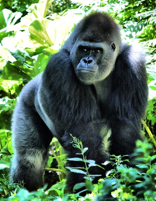 african wildlife 2