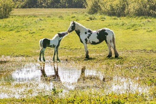 horse life calendar