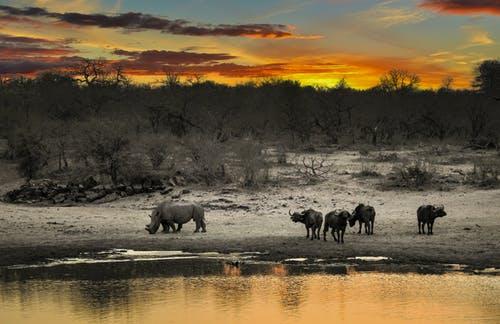 support african wildlife