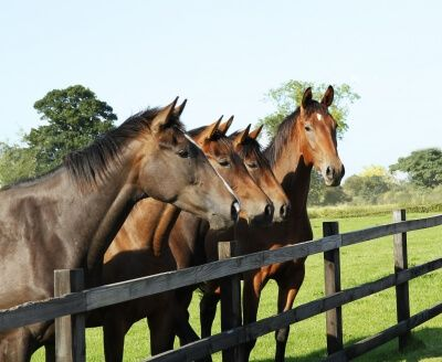 Horse Whispering Animal Communication That Gets Results With Your Horse, Dog or Cat