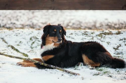 animal communication training