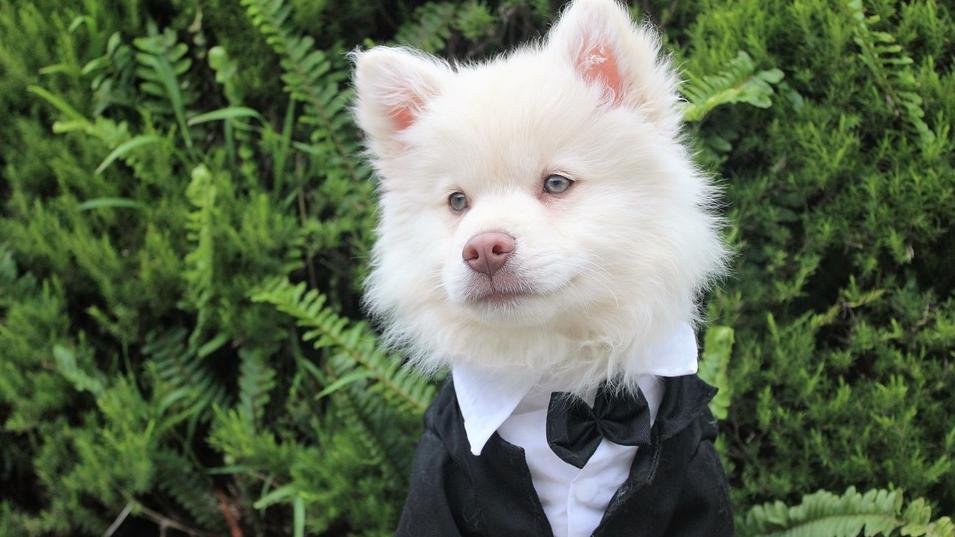 include pet in wedding