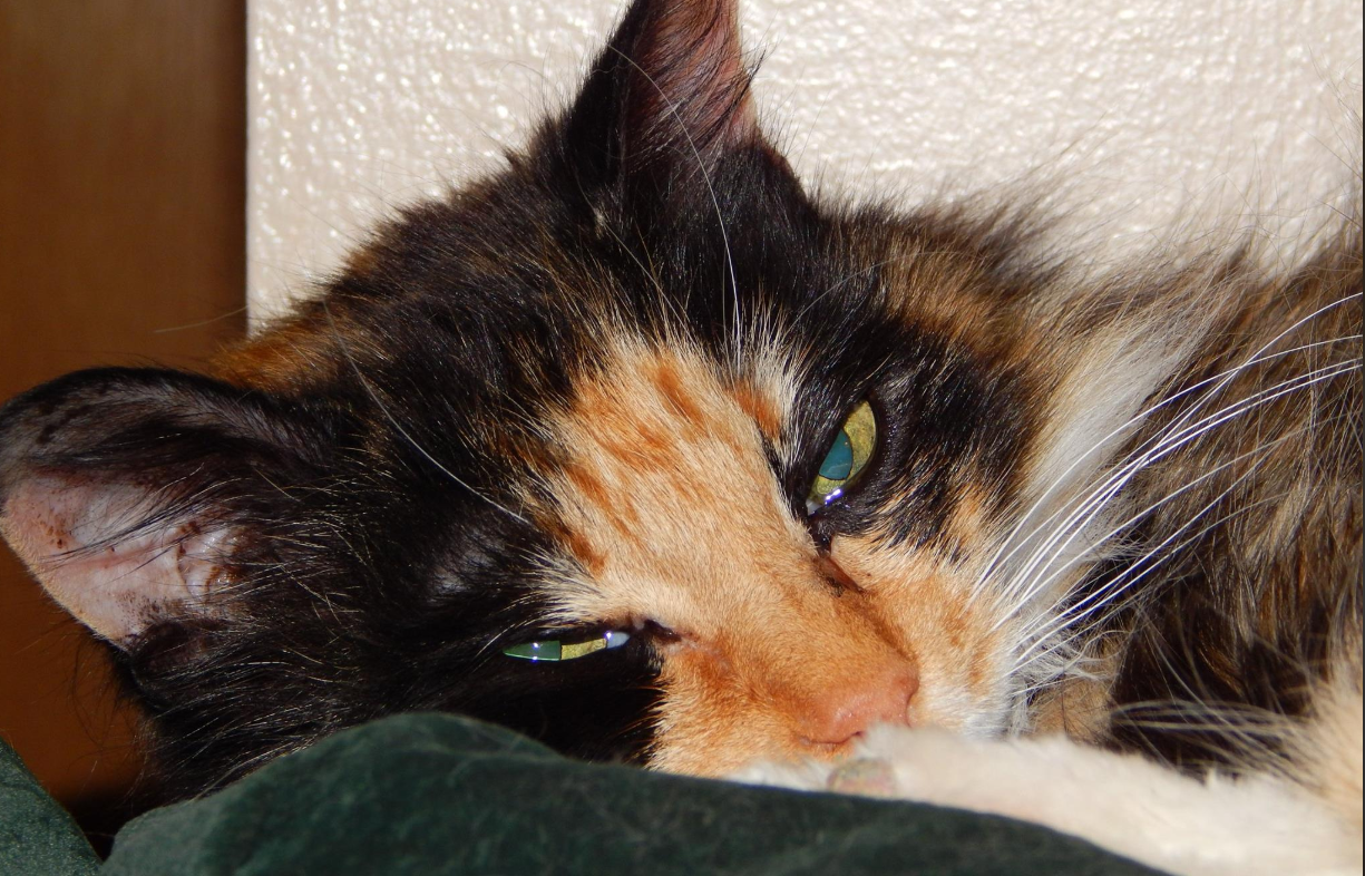 cat's purr