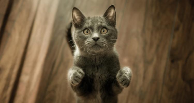 active kitty