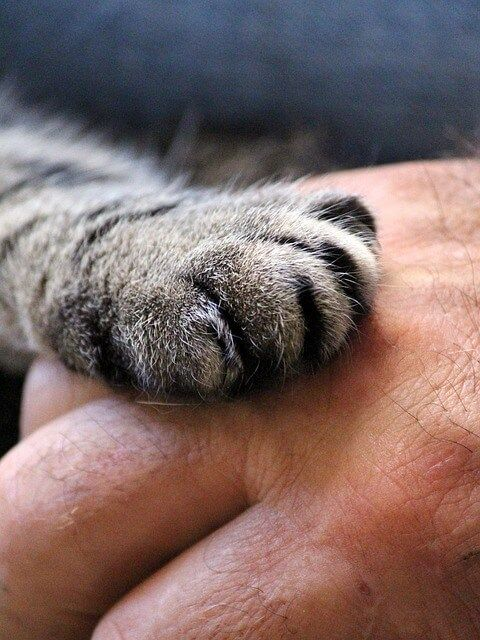 cats-paw-1375792_640