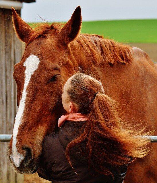 Horses need help too