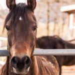horse-419235_640