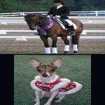 horse whisperer helps horse and dog