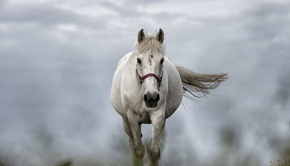 soul of a horse
