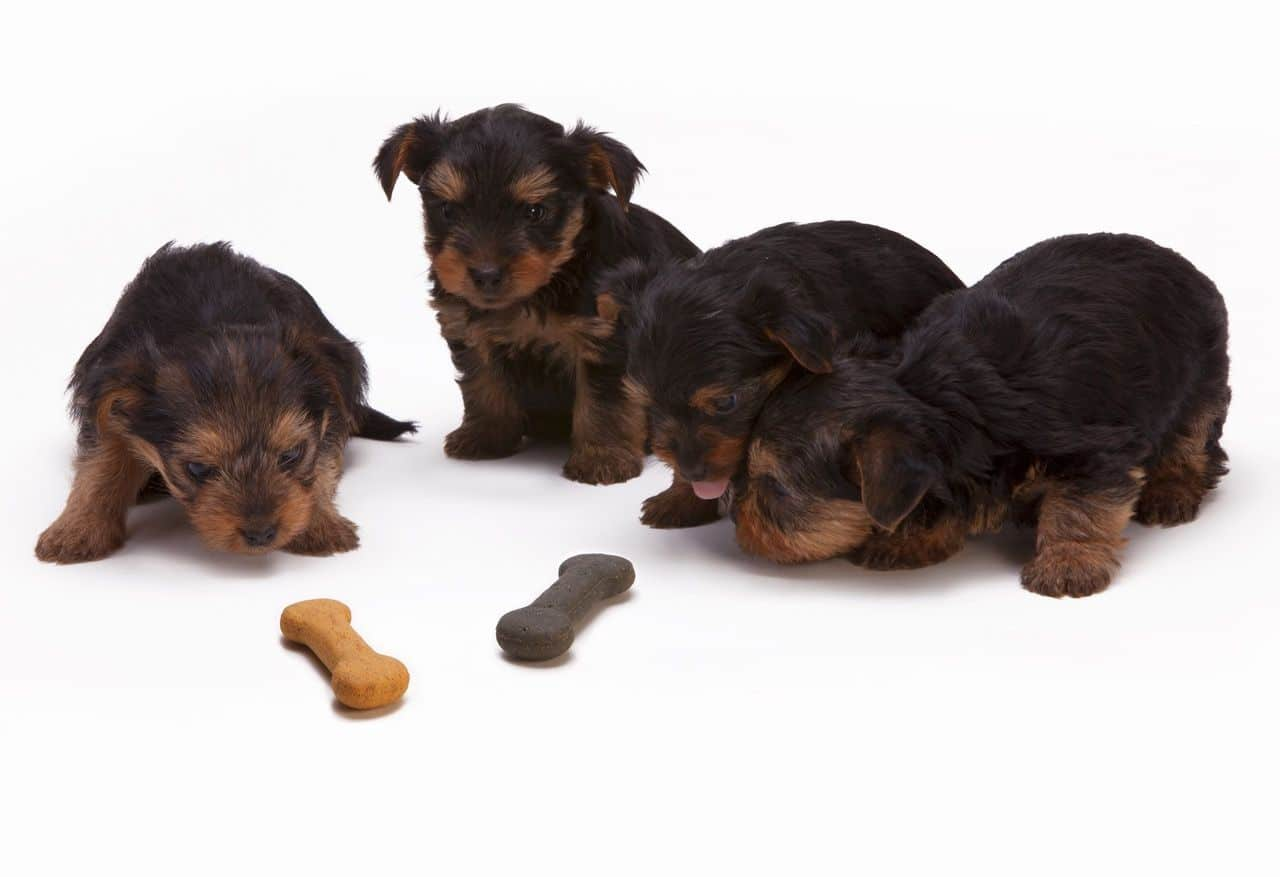 best Feeding Method for your dog