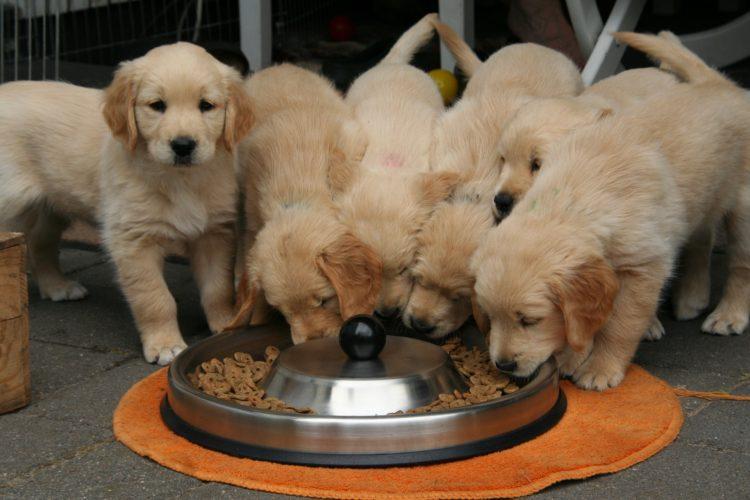 best Feeding Method for your dog 2