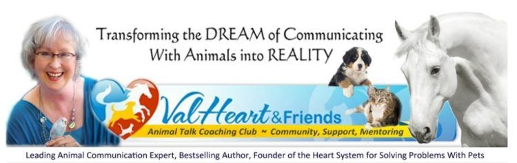 Val Heart And Animal Communication