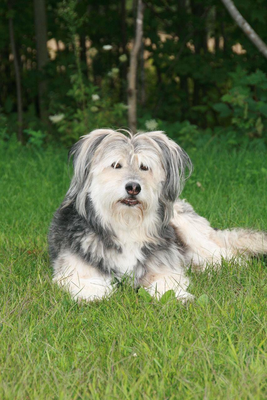 dog-1273763_1280