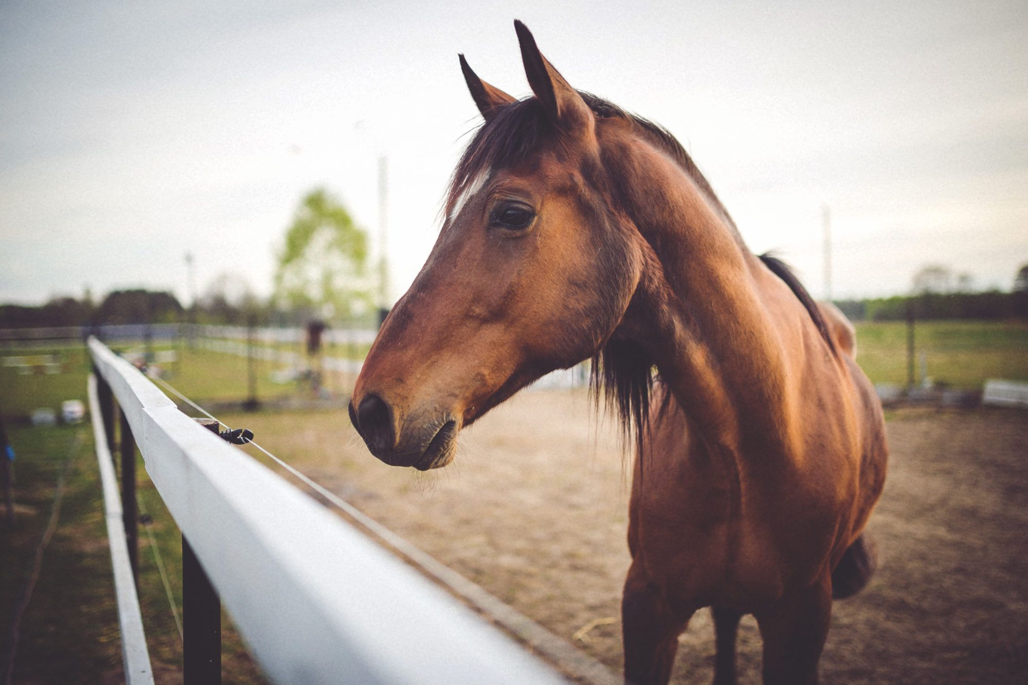 horse whispering solves problems with horses