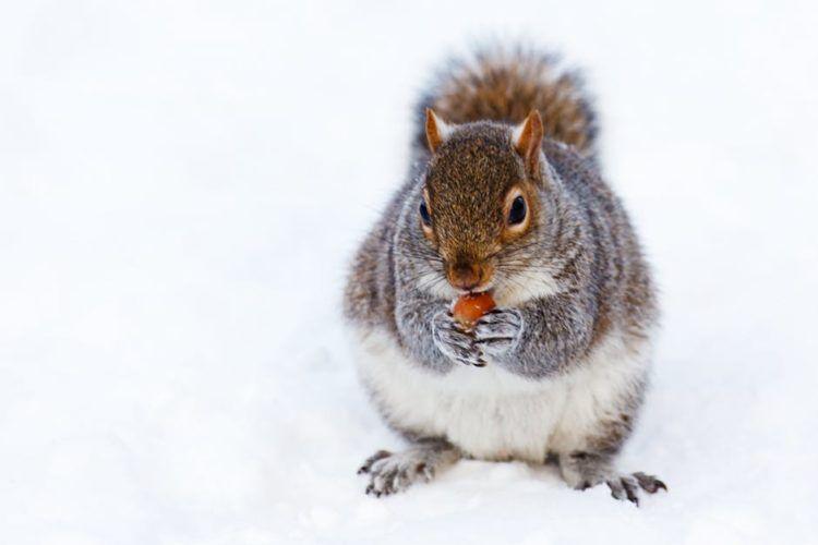 Squirrel Animal Whisperer