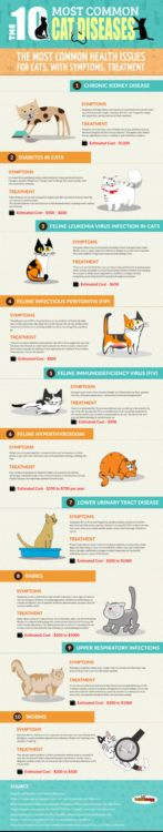 common-cat-diseases