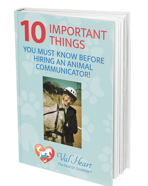 10 things to know BEFORE hiring an animal communicator