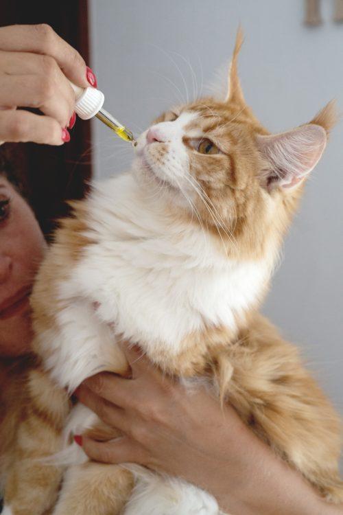 cbd cat 4