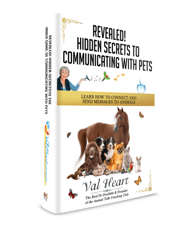 hidden secrets to communicating with pets