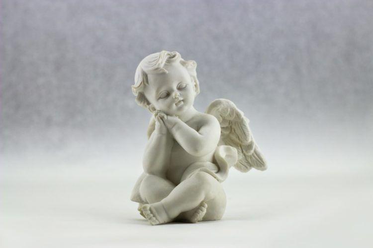 angel-animals