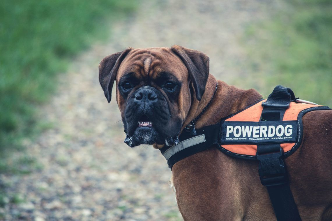 service and emotional support dogs
