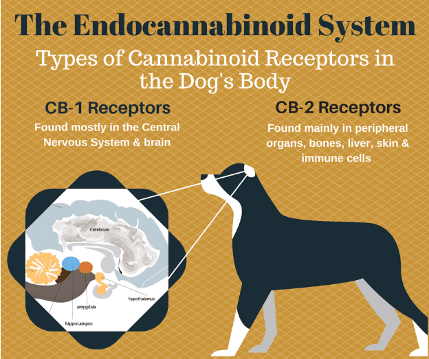 Dogs and the Endocannabinoid System