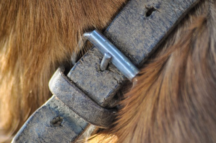 leather dog collars 2