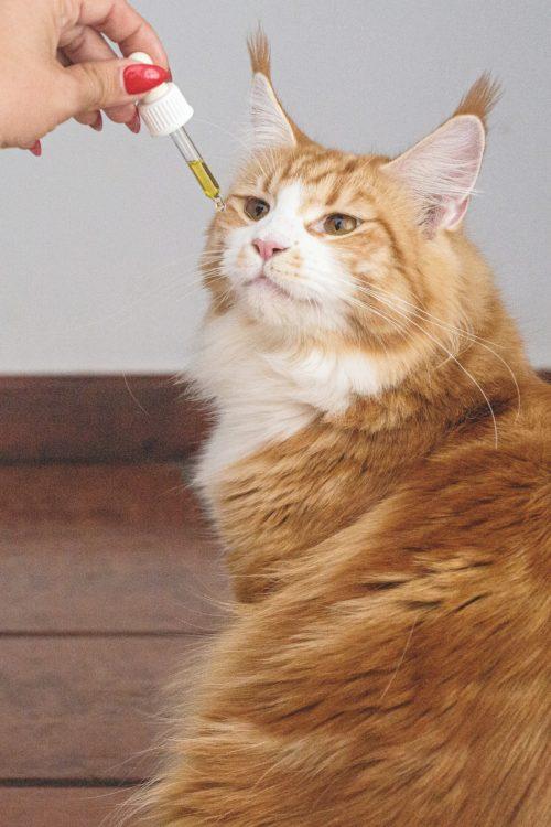 cbd cat 3