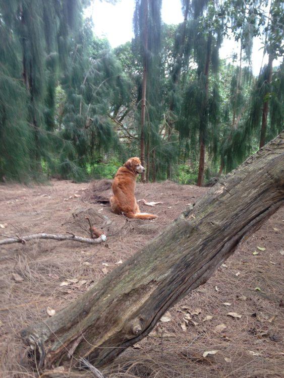 Take Me Home Bella Communication from Spirit Dog Guide