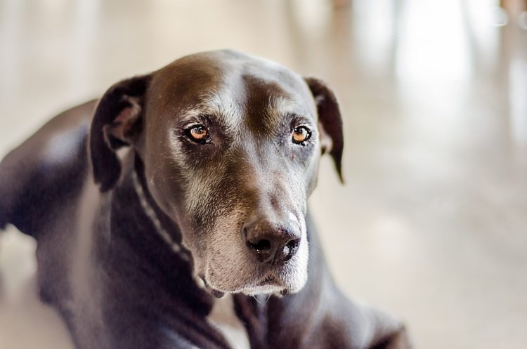 Animal Healing: Helping An Aging Dog Express Her Needs
