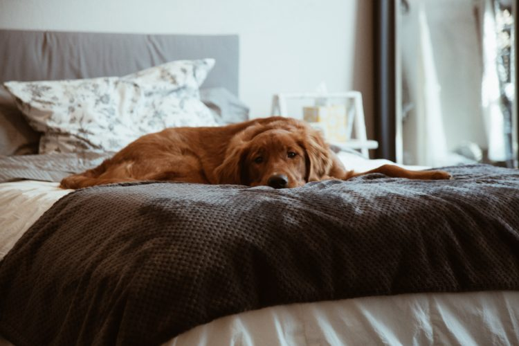 Animal Healing: Helping An Aging Dog Express Her Needs